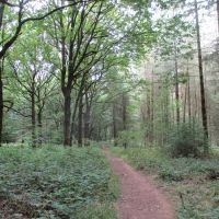 Quiet forest dog walk near the Wyre Forest, Shropshire - IMG_2713.JPG
