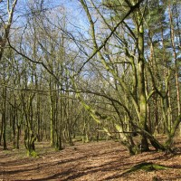 Hurt Forest dog walk near Farley Green, Surrey - Surrey dog walks.JPG