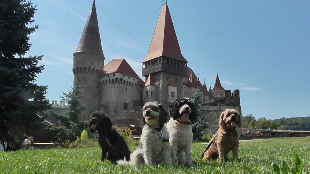 In Search of the Real Count Dracula – A Tour of Romania with Dogs
