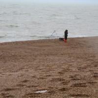 A35 Jurassic coast dog walk, Dorset - IMG_0418.JPG