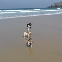 Holywell Bay Beach - dog-friendly, Cornwall - 20190423_111741.jpg