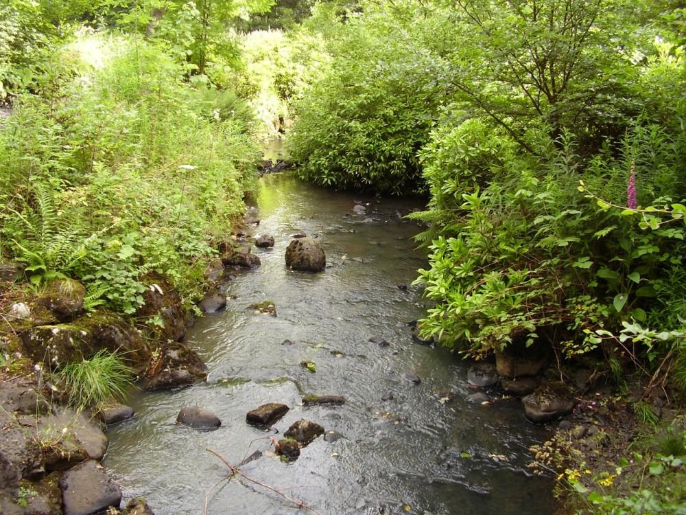 M8 Junction 4 dog walk near Whitburn, Scotland - Dog walks in Scotland
