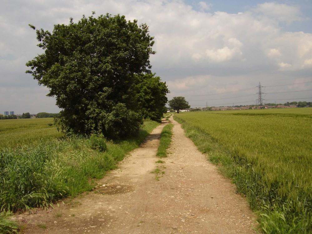 M25 Junction 14 dog walk and dog-friendly pub, Berkshire - Dog walks in Berkshire