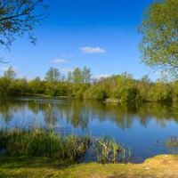 A130 country park dog walk and cafe, Essex - essex dog walking places.jpg