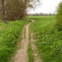 M11 Junction 9 dog walk and dog-friendly pub, Essex - Dog walks in Essex