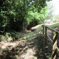 A428 dog walk and dog-friendly pub, Northamptonshire - Northamptonshire dog walk and dog-friendly pub
