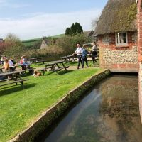 Dog-friendly pub with great food, and dog walks, Dorset - Dorset dog-friendly pubs.jpg