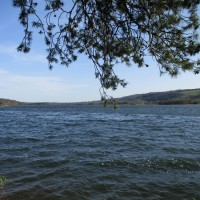 Lakeside dog walk, Somerset - Somerset dog walking places.JPG