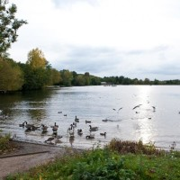 Lovely dog walk with trees, a river and 2 lakes, Hertfordshire - Bury Lake 3-jpg.jpeg