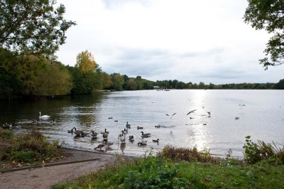 Lovely dog walk with trees, a river and 2 lakes, Hertfordshire - Driving with Dogs