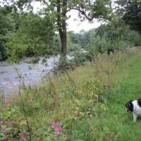 Riverside dog walk and dog-friendly pub, Yorkshire - Yorkshire dog-friendly pub and dog walk