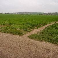 M11 Junction 9 dog walk and dog-friendly pub, Essex - Dog walks in Essex