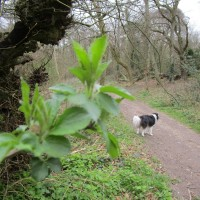 A29 forest dog walk and cafe near Arundel, West Sussex - Sussex dog walks.JPG