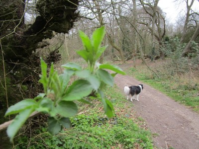 A29 forest dog walk and cafe near Arundel, West Sussex - Driving with Dogs