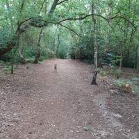 Beautiful hilly woods for a dog walk, Norfolk - A7437272-793F-42FB-B3A4-0EB1AEC621D0.jpeg