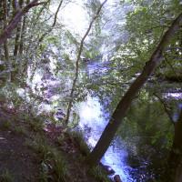 M9 Junction 4 Muiravonside dog walk, Scotland - Dog walks in Scotland