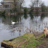 Ulverston Canal dog walk, Cumbria - 20190318_145524.jpg