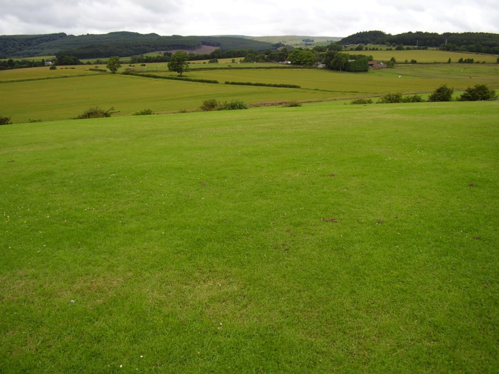 M9 junction 9 battlefield dog walk, Scotland - Dog walks in Scotland