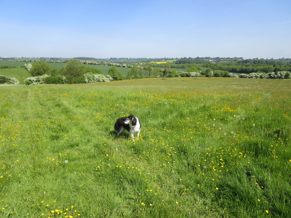 Ravensthorpe dog-friendly pub and dog walk, Northamptonshire - Dog walks in Northamptonshire