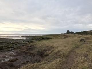 Powfoot Beach - dog-friendly, Scotland - ABCBA745-2788-4C8E-99C9-9D20C3F5A9DF.jpeg
