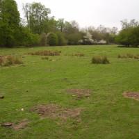 M11 Junction 8 dog walk in the forest, Essex - Dog walks in Essex