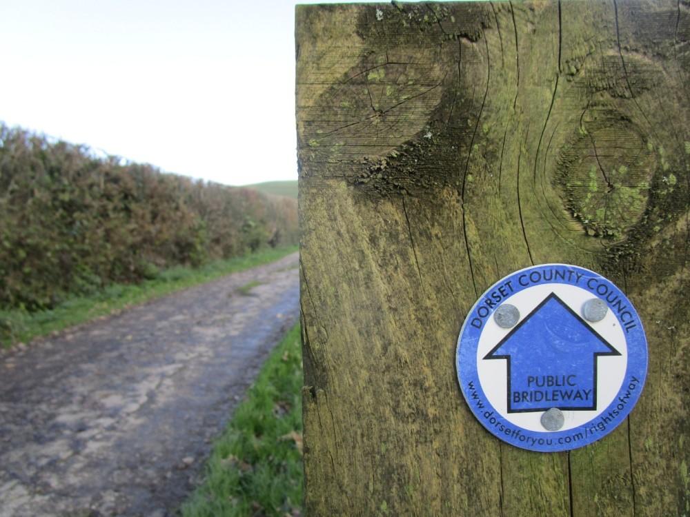 A37 Lankham Bottom dog walk and pub, Dorset - IMG_6337.JPG