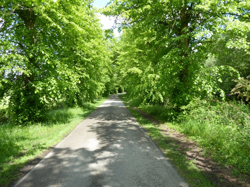Woodhall Spa - accessible dog walk from a woodland tea house, Lincolnshire - Dog walks in Lincolnshire
