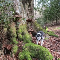 Woodland dog walk near Burwash, East Sussex - Sussex dog walks.JPG