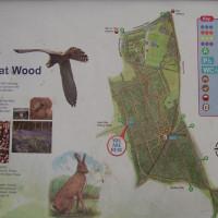 M18 Junction 4 woodland dog walk, Yorkshire - Dog walks in Yorkshire