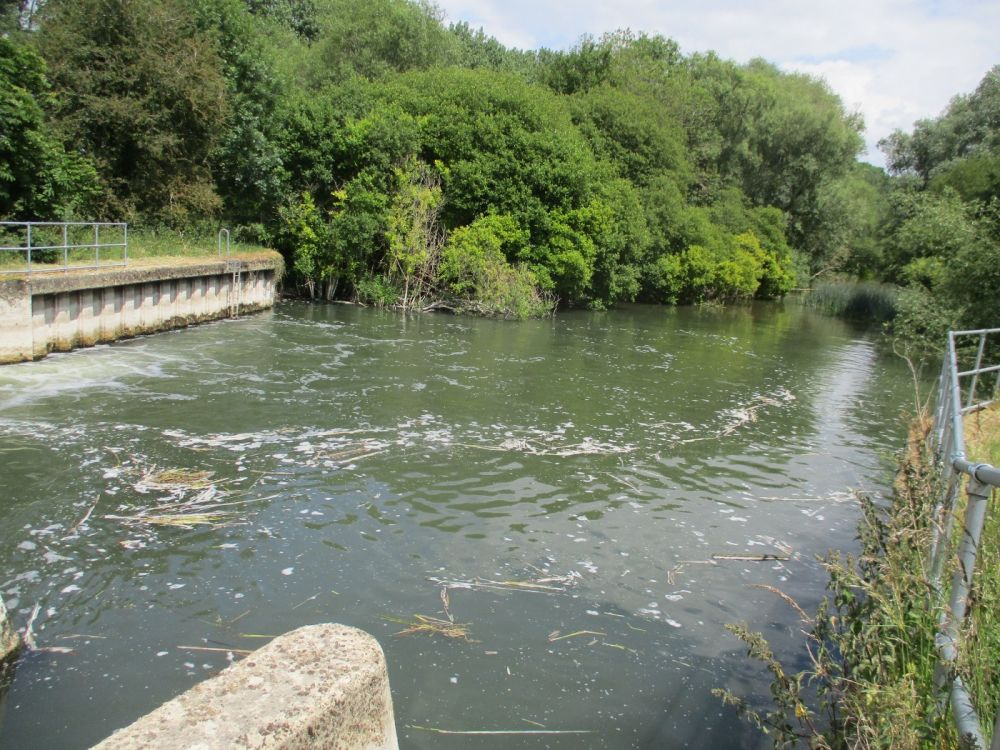 Scenic Lock and riverside path, Oxfordshire - Oxfordshire dog walks.JPG