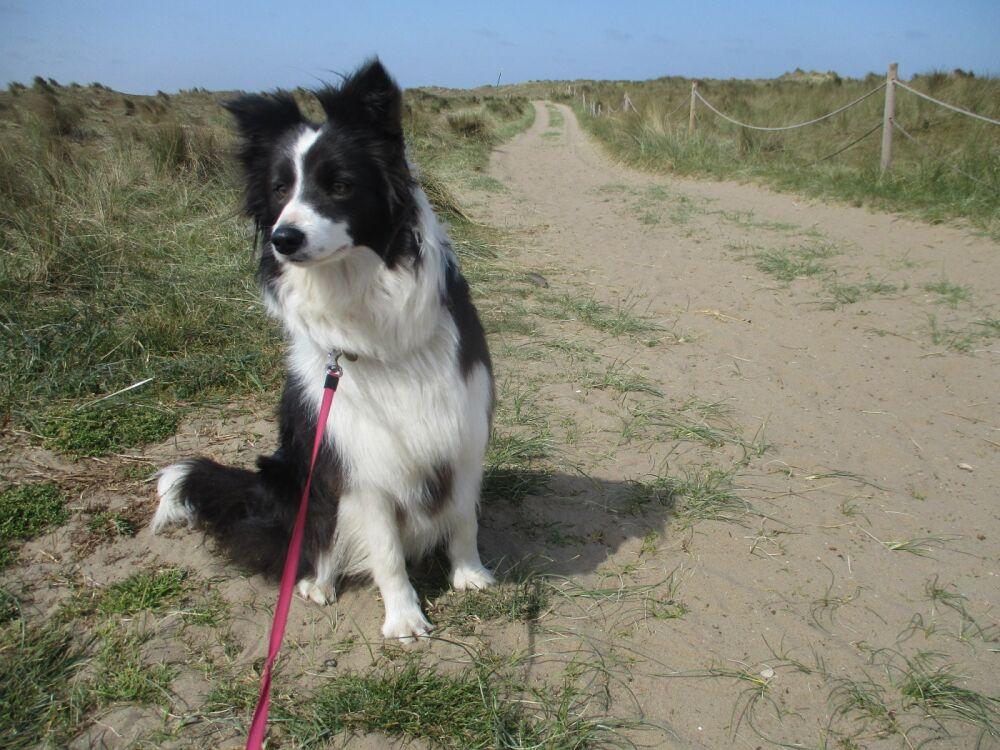 Winterton on Sea dog-friendly beach, Norfolk - IMG_5192.JPG