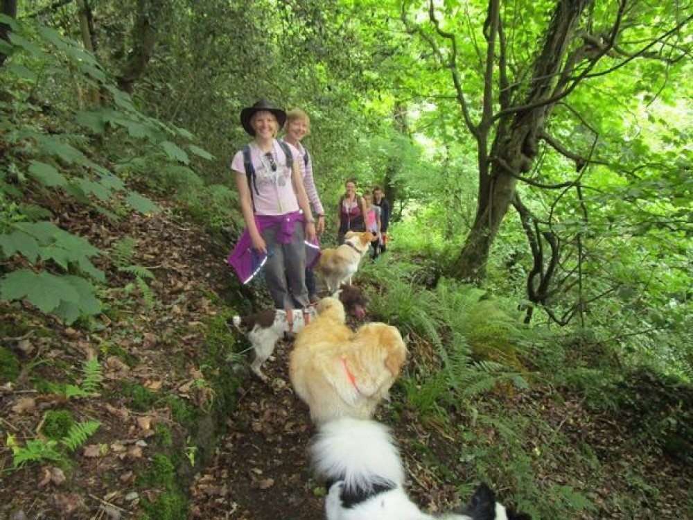 Stylish and practical gear for summer dog walks