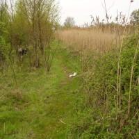 M18 Doncaster North Services dog walk, Yorkshire - Dog walks in Yorkshire