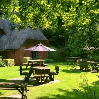 A342 dog-friendly pub and dog walk on Salisbury Plain, Wiltshire - Wiltshire dog-friendly pub and dog walk