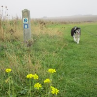 Coastal dog walks, dog-friendly beach and pub, Kent - Dog walks in Kent
