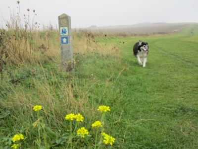 Coastal dog walks, dog-friendly beach and pub, Kent - Driving with Dogs