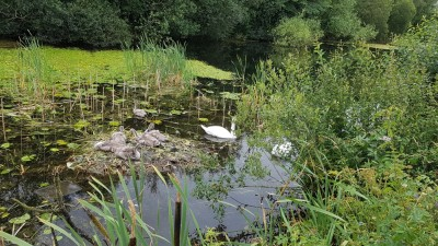 Ulverston Canal dog walk, Cumbria - Driving with Dogs
