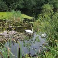 Ulverston Canal dog walk, Cumbria - 20190721_105854.jpg
