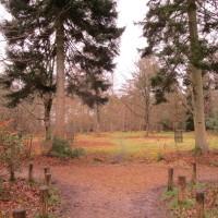 Arboretum and forest dog walk, Hampshire - Surrey dog walks.JPG