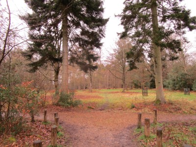 Arboretum and forest dog walk, Hampshire - Driving with Dogs