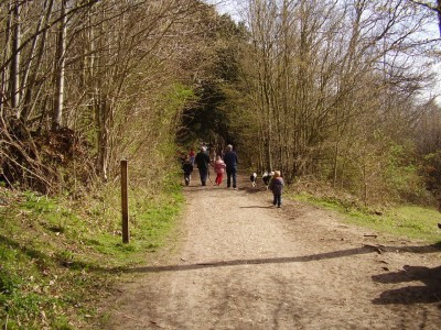 M20 Junction 2 country park dog walk, Kent - Driving with Dogs