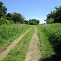 A420 dog-friendly pub and dog walk, Oxfordshire - Oxfordshire dog-friendly pub and dog walk