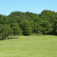Ancient forest dog walk and dog-friendly pub near Chigwell, Essex - Essex Forest dog walk and dog-friendly pub.jpg