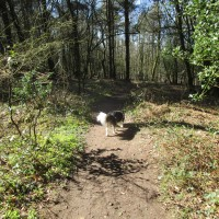 Dog walk on the Downs near Haslemere, West Sussex - Dog walk in Sussex.JPG
