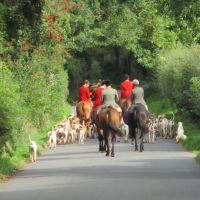 Cotswold village dog-friendly pub and walk, Gloucestershire - Cotswolds dog-friendly pub and dog walk.JPG