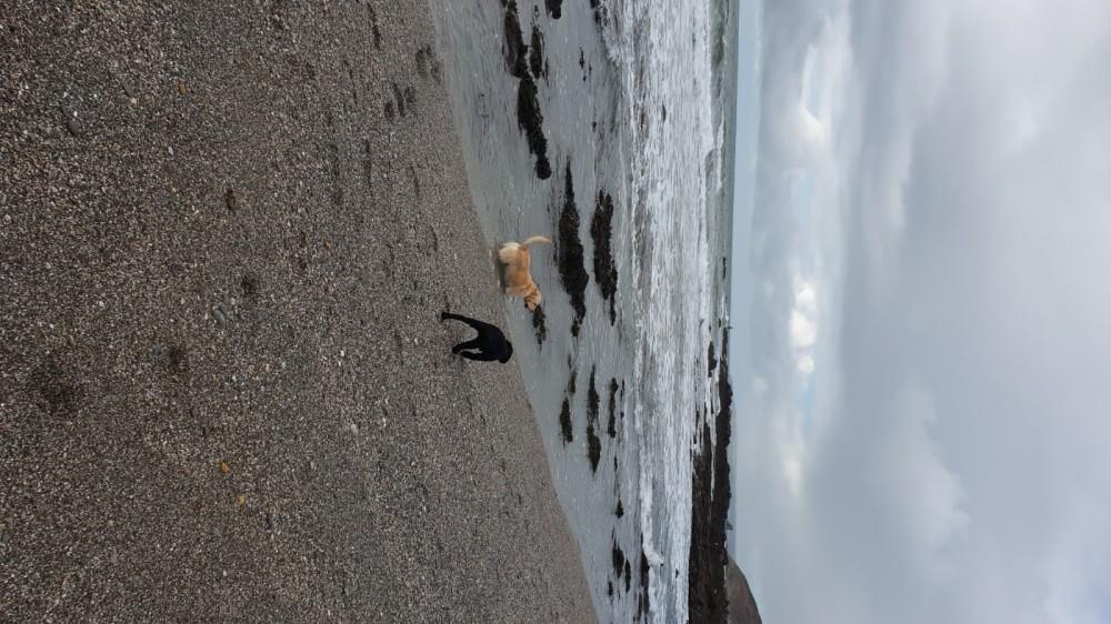Portwrinkle Beach - dog-friendly, Cornwall - 20191015_111402.jpg