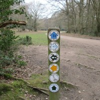 Aldbury dog-friendly pub and walks, Hertfordshire - dog-friendly pub and walk Hertfordshire.jpg