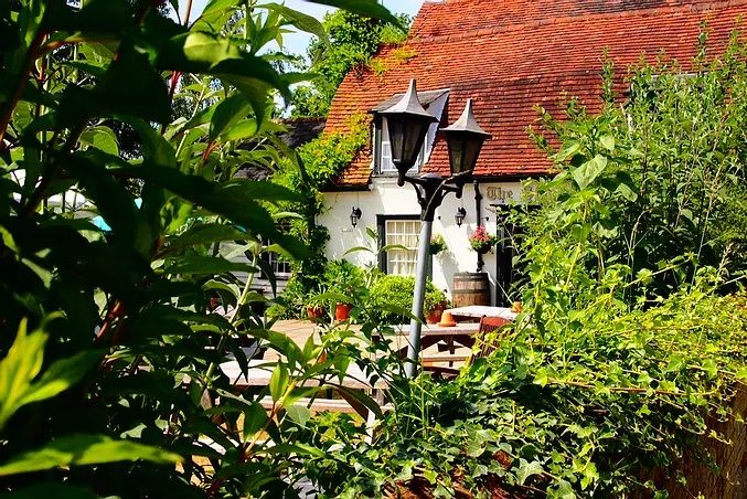 Lovely country pub with a short dog walk, Essex - Essex dog-friendly pub and dog walk