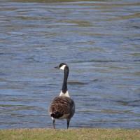 Riverside dog Walk, Worcestershire - 76E7C154-07DB-4252-B8F0-9A8457F342F7.jpeg