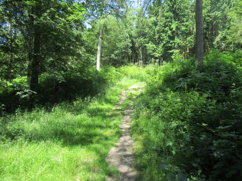 Woodland dog walk and ancient history, Herefordshire - Herefordshire dog walks.JPG